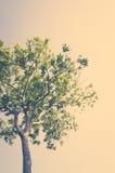 Paesaggio di estate con il cielo (l'immagine filtrata ha elaborato vi fotografie stock libere da diritti