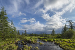 Paesaggio di estate con il fiume, cielo nuvoloso, foresta ed erba e fiori immagini stock libere da diritti