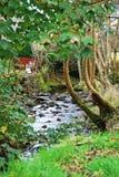 Paesaggio di estate con il fiume in parco Fotografie Stock