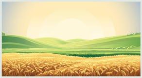Paesaggio di estate con il grano del campo royalty illustrazione gratis