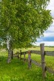 Paesaggio di estate con l'albero di betulla ed il recinto di legno Immagini Stock Libere da Diritti