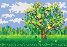 Paesaggio di estate con l'albero verde Immagini Stock