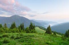 Paesaggio di estate con la foresta dell'abete in montagne Fotografia Stock