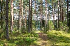Paesaggio di estate con la foresta un giorno soleggiato fotografia stock libera da diritti