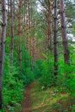 Paesaggio di estate con la foresta verde Fotografia Stock Libera da Diritti