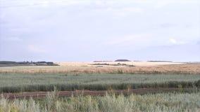 Paesaggio di estate con la pianta di fioritura nel campo vicino alla foresta ed al cielo blu scena Piante per sfondo naturale fotografia stock