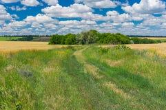 Paesaggio di estate con la strada sterrata coperta di erba verde selvatica fra i giacimenti di grano Fotografie Stock
