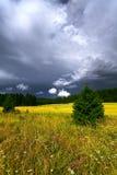Paesaggio di estate con le nuvole di pioggia Campo giallo coltivare C verde Immagine Stock