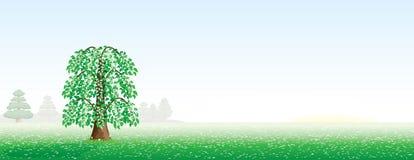 Paesaggio di estate con un albero Fotografie Stock Libere da Diritti