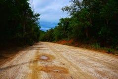 Paesaggio di estate con una strada sabbiosa vuota in foresta immagine stock