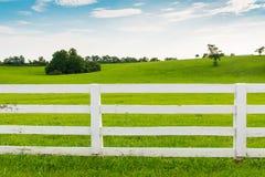Paesaggio di estate del paese Fotografia Stock