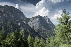 Paesaggio di estate della montagna in un bello giorno Fotografia Stock