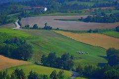 Paesaggio di estate delle colline di Piemonte per coltivare Fotografia Stock Libera da Diritti