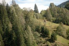 Paesaggio di estate delle montagne carpatiche con le colline verdi ed il recinto di legno, Fotografie Stock Libere da Diritti