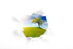 Paesaggio di estate dietro il foro bianco della parete Fotografia Stock