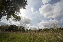 Paesaggio di estate in erba lunga fotografia stock