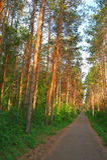 Paesaggio di estate in foresta Immagini Stock Libere da Diritti