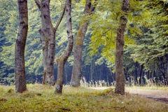 Paesaggio di estate: foresta, alberi nella priorità alta e fondo Immagine Stock Libera da Diritti