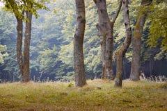 Paesaggio di estate: foresta, alberi nella priorità alta e fondo Fotografie Stock