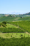 Paesaggio di estate in Langhe (Italia) Immagine Stock Libera da Diritti