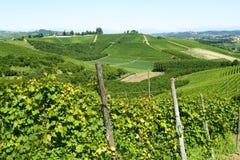 Paesaggio di estate in Langhe (Italia) Fotografie Stock