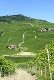 Paesaggio di estate in Langhe (Italia) Immagine Stock