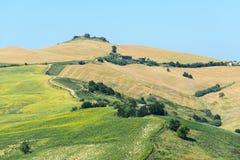Paesaggio di estate Marche (in Italia) Fotografie Stock