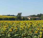 Paesaggio di estate Marche (in Italia) Immagini Stock