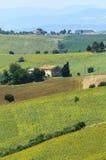 Paesaggio di estate Marche (in Italia) Fotografie Stock Libere da Diritti