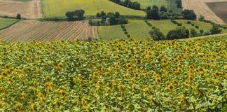 Paesaggio di estate Marche (in Italia) Immagine Stock Libera da Diritti