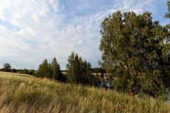 Paesaggio di estate nel distretto di Mamontovsky del territorio di Altai Immagini Stock Libere da Diritti