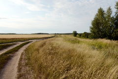 Paesaggio di estate nel distretto di Mamontovsky del territorio di Altai Fotografia Stock