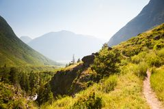 Paesaggio di estate di River Valley in montagne di Altai, Russia Fotografie Stock