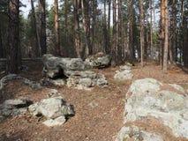 Paesaggio di ESTATE Scattering di pietra nel legno Immagini Stock