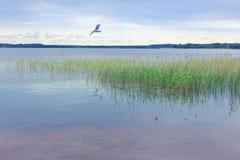Paesaggio di estate sul lago Seliger La Russia Fotografie Stock