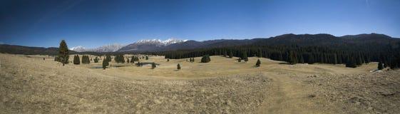 Paesaggio di estate sulla pianura di Cansiglio immagine stock libera da diritti