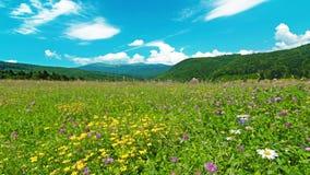 Paesaggio di estate. timelapse. 4K. HD PIENO, 4096x2304. video d archivio