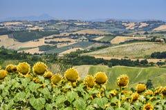 Paesaggio di estate vicino a Monterubbiano Fermo, Marche Fotografia Stock