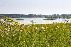 Paesaggio di estate - vista di River Valley del Odra Оder fra i prati e le foreste Fotografia Stock Libera da Diritti