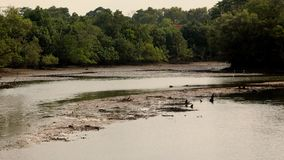Paesaggio di fauna selvatica nella foresta pluviale a Singapore fotografia stock