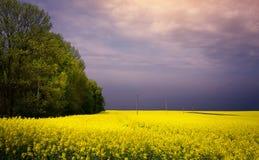 Paesaggio di fioritura della campagna della primavera; campo giallo di fioritura fotografie stock libere da diritti