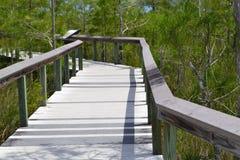 Paesaggio di Florida Fotografie Stock