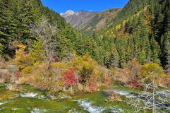 Paesaggio di flusso continuo acqua e degli alberi a Jiuzhaigou immagini stock libere da diritti