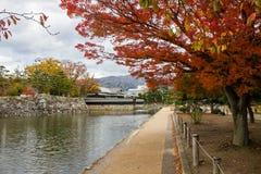Paesaggio di fogliame variopinto alla riva del lago in autunno fotografia stock