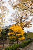 Paesaggio di fogliame variopinto in autunno fotografie stock libere da diritti