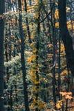 Paesaggio di giorno di autunno foresta di autunno Immagine Stock