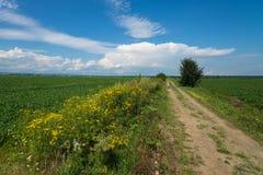 Paesaggio di giorno di estate con il campo, il cielo nuvoloso e la strada immagini stock