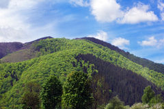 Paesaggio di grande montagna verde con gli alberi verdi Fotografia Stock