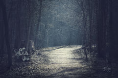 Paesaggio di Halloween Foresta scura con la strada vuota Fotografie Stock Libere da Diritti
