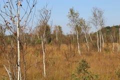 Paesaggio di Heath con le betulle nell'IBM Moorland in Austria settentrionale, in autunno in anticipo immagine stock